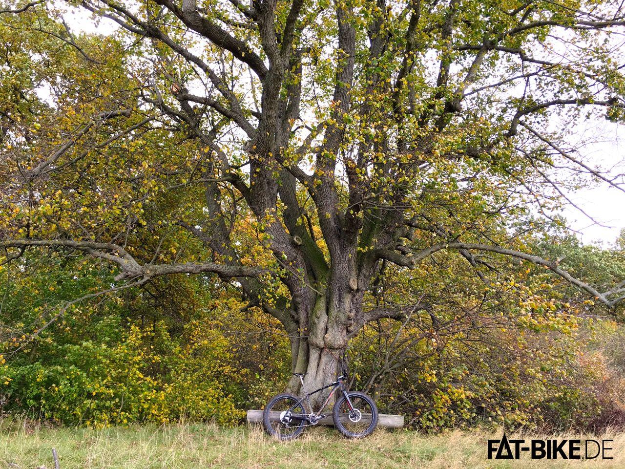 Ur-FATty und Ur-Alt-Baum
