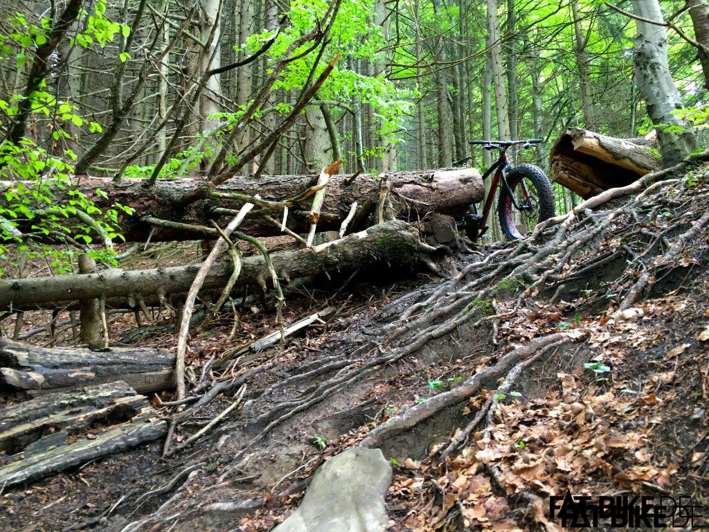 Trail vom Mittagberg