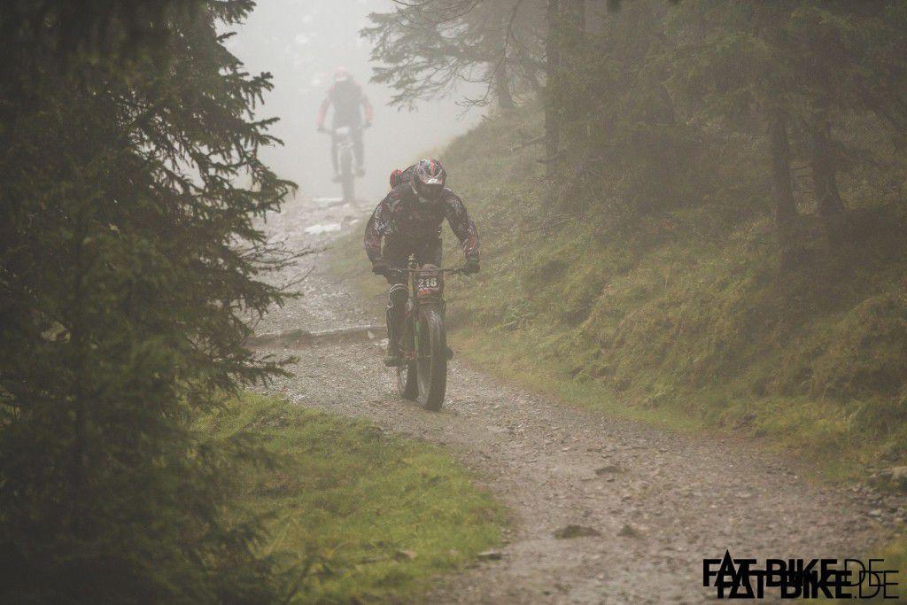 Gorilla - äh - MARK im Nebel.