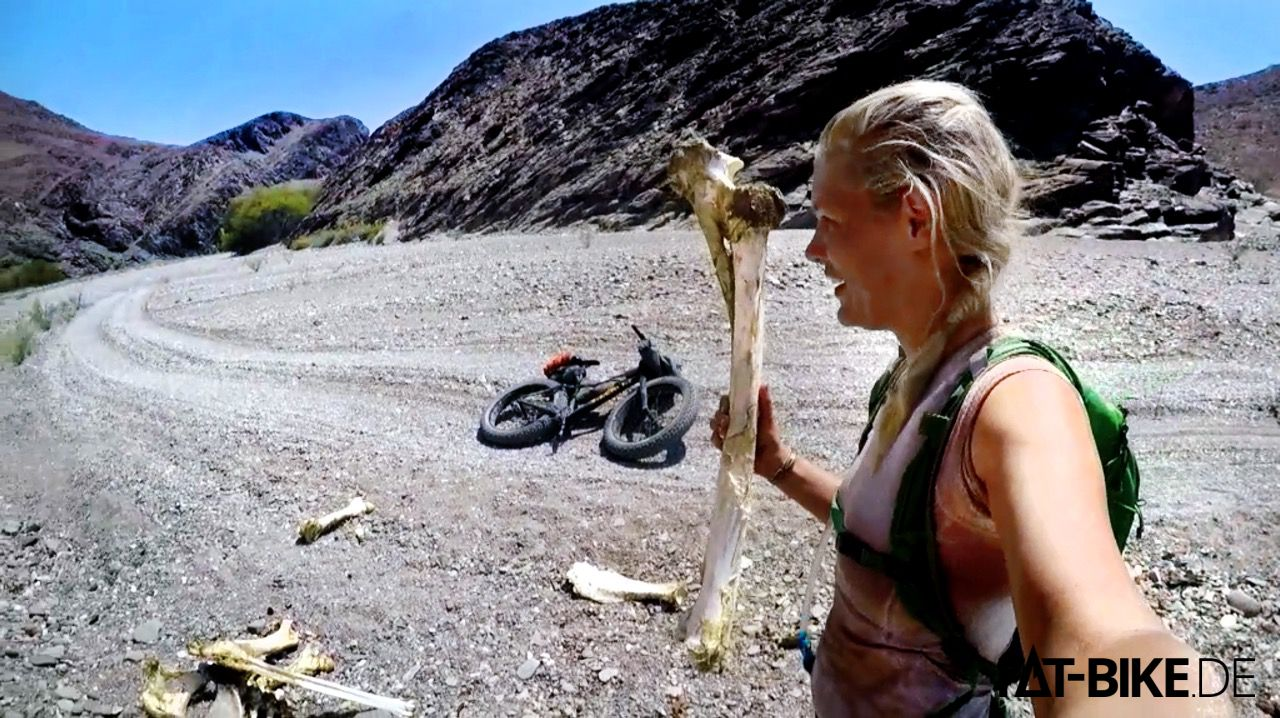 Giraffenknochen, Überreste eines Todeskampfes mit der Hitze, oder mit Löwen.