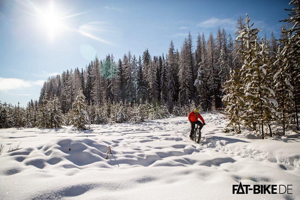 Im Schnee fühlt es sich am besten (Quelle: Norco.com)